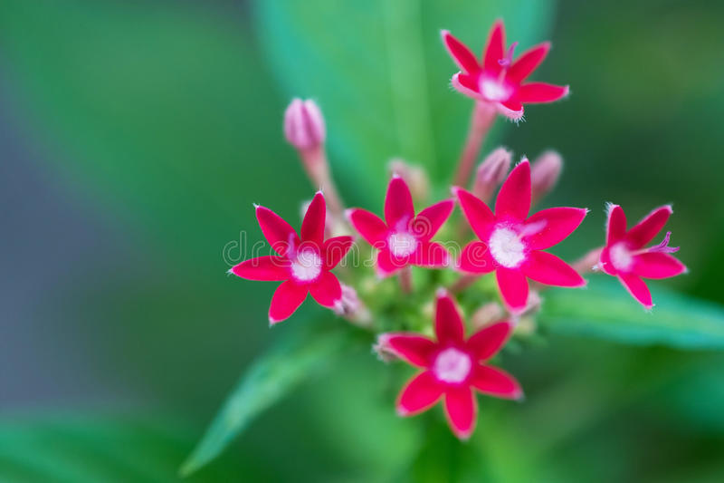 一个小组的宏观细节小的桃红色花 库存图片