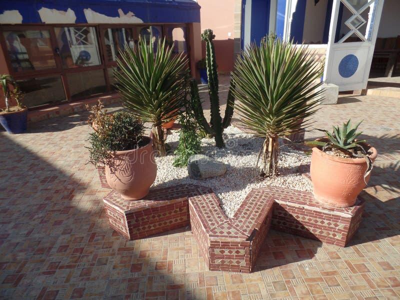 一个屋顶大阳台的热带植物在索维拉,摩洛哥 免版税库存照片