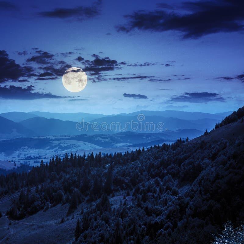 一个山坡的具球果森林在晚上 免版税库存照片