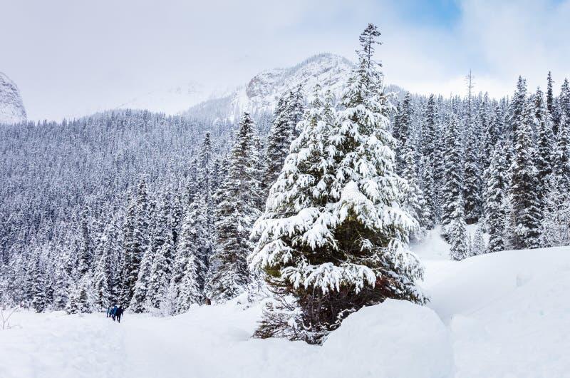 一个山行迹的人们通过加拿大人的罗基斯斯诺伊森林 库存照片