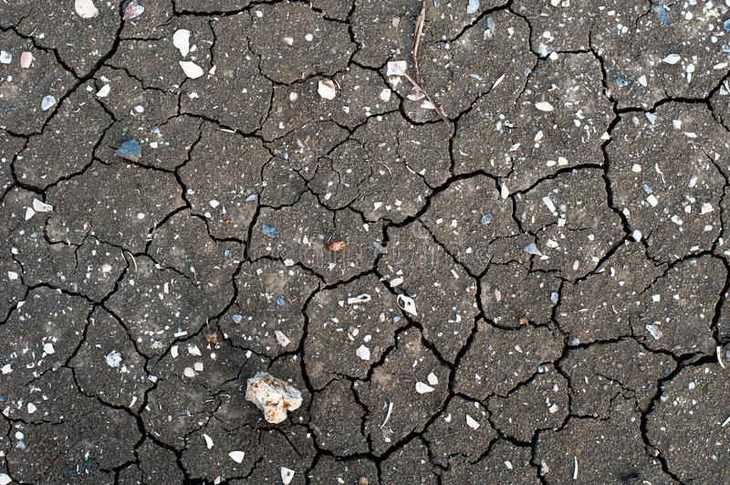一个干燥和破裂的灰色河床的纹理与化石壳的 库存照片