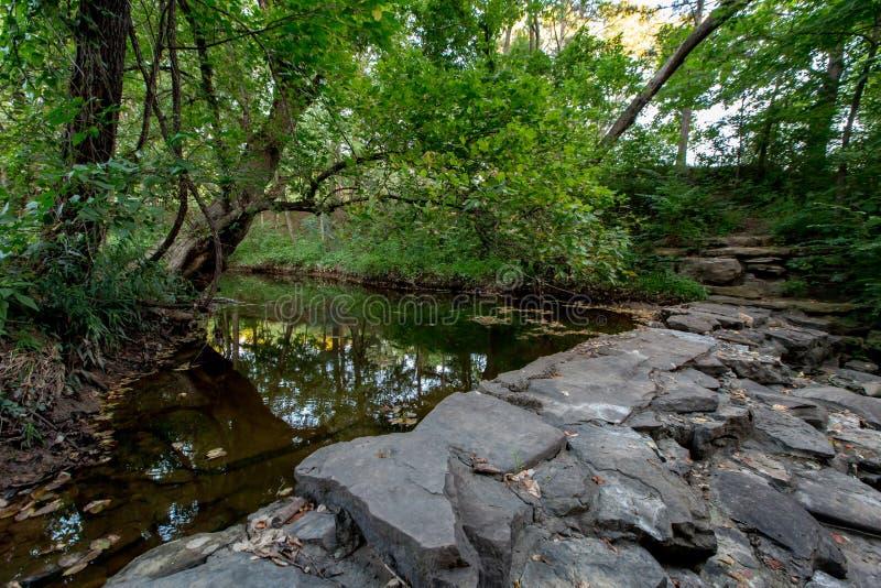 一个平静的春天或夏天树木繁茂的自然室外场面。 免版税库存图片