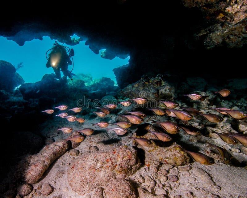 一个年轻女性潜水者在玻璃状扫除机学校在一个洞的发光光在佛罗里达群岛 免版税库存图片