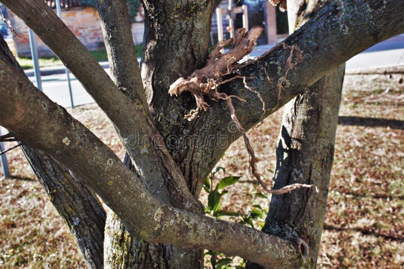 一个年轻树干的细节 库存照片