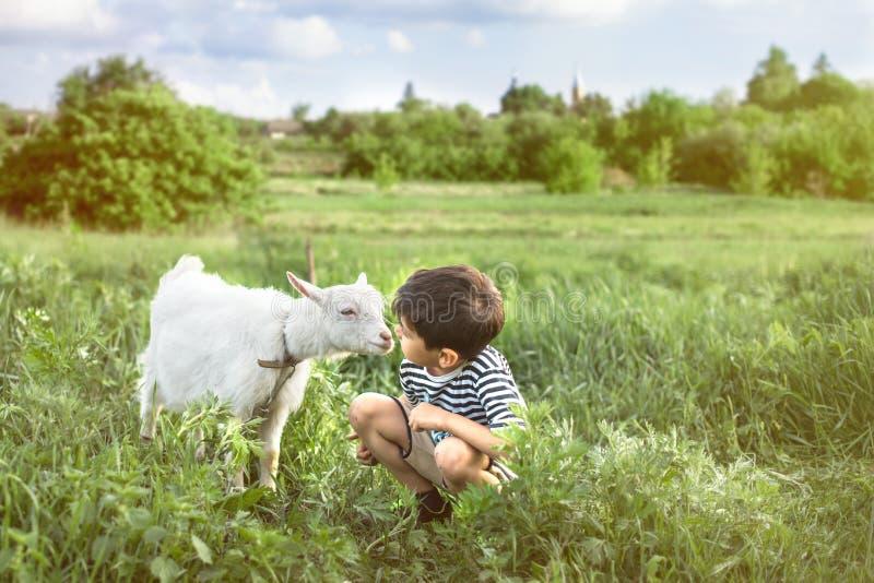 一个年轻男孩佩带被剥离的背心蹲坐的和谈话对在草坪的一只白色山羊农场的他们看彼此attentivelyA 免版税库存图片