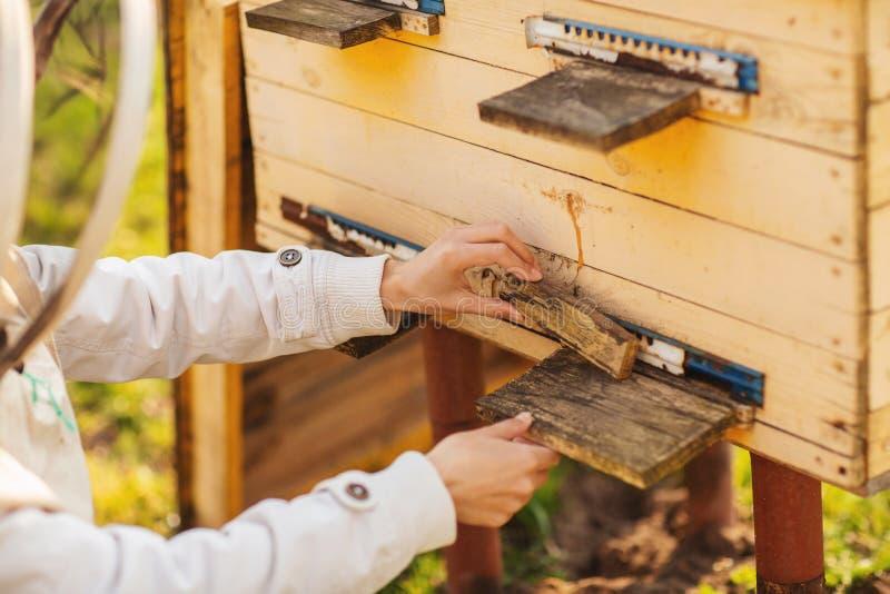 一个年轻蜂农女孩与蜂和蜂箱一起使用在蜂房,在春日 库存照片