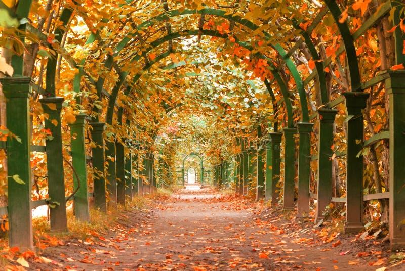 一个庭院秋天 免版税库存图片