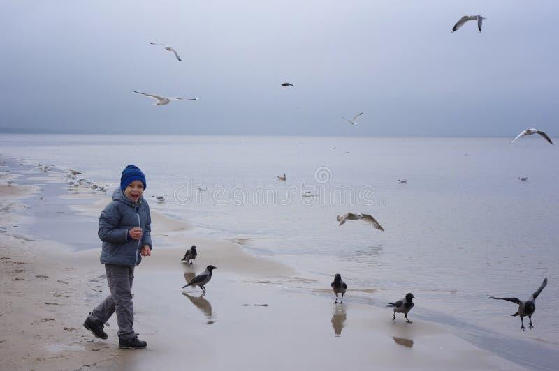 一个快乐的男孩喂养在海滨的鸥在冬天、春天或者秋天 许多鸥是飞行  由海的寒冷 免版税图库摄影