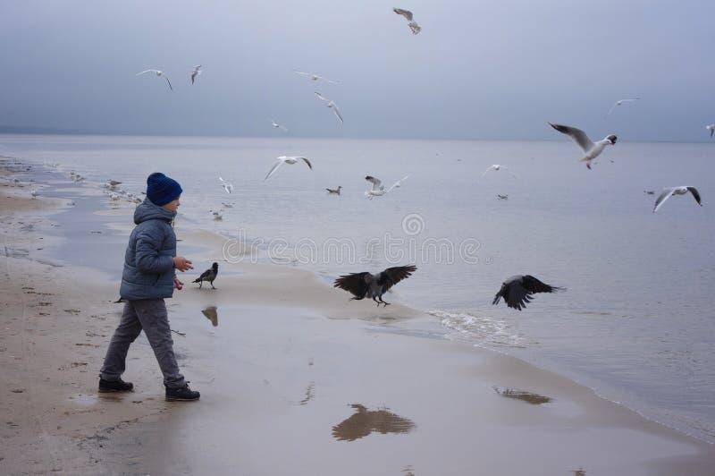 一个快乐的男孩喂养在海滨的鸥在冬天、春天或者秋天 许多鸥是飞行  由海的寒冷 免版税库存图片