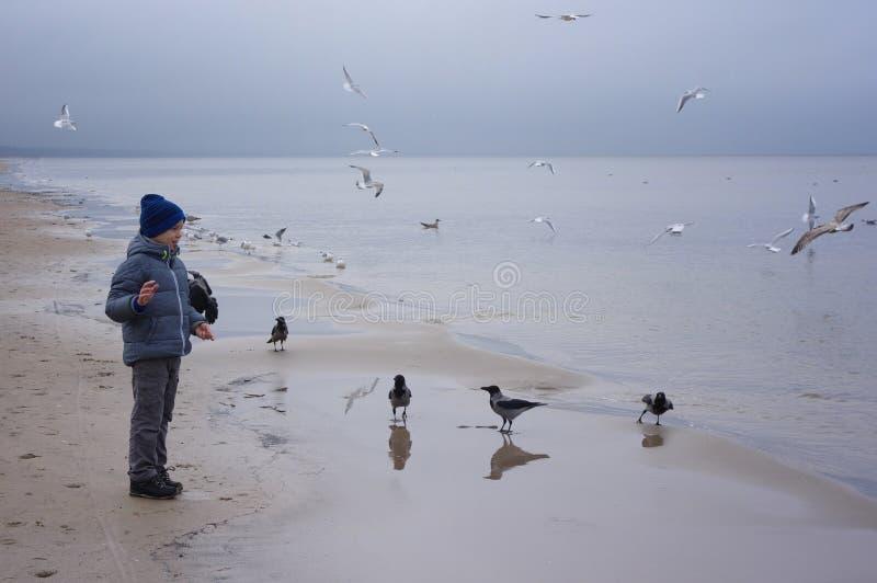 一个快乐的男孩喂养在海滨的鸥在冬天、春天或者秋天 许多鸥是飞行  由海的寒冷 库存照片