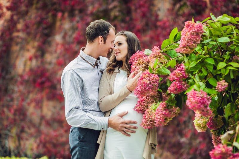 一个怀孕的少妇和她的丈夫 站立在红色秋天树篱的一个愉快的家庭,嗅到花八仙花属 怀孕的wom 免版税图库摄影