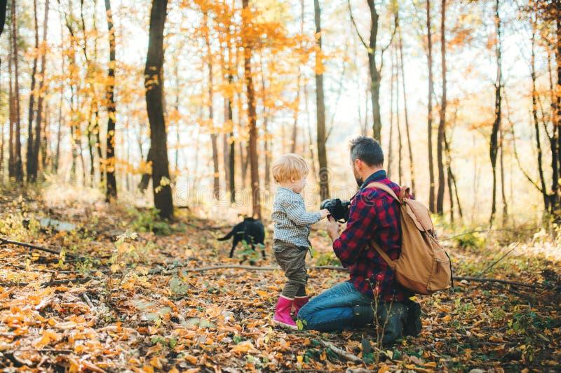 一个成熟父亲和一个小孩儿子在秋天森林里,拍与照相机的照片 免版税库存照片