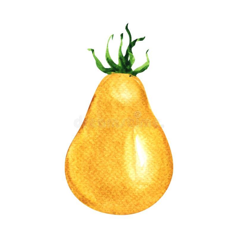 一个新鲜的黄色蕃茄,在白色的水彩例证 库存照片