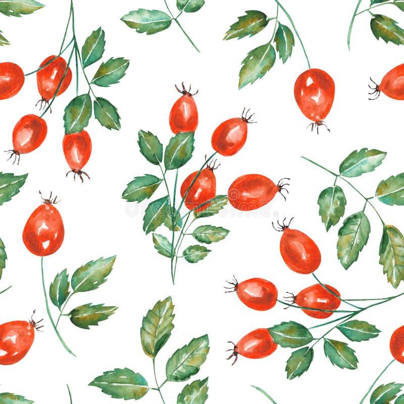 一个无缝的样式用水彩野玫瑰果分支 皇族释放例证