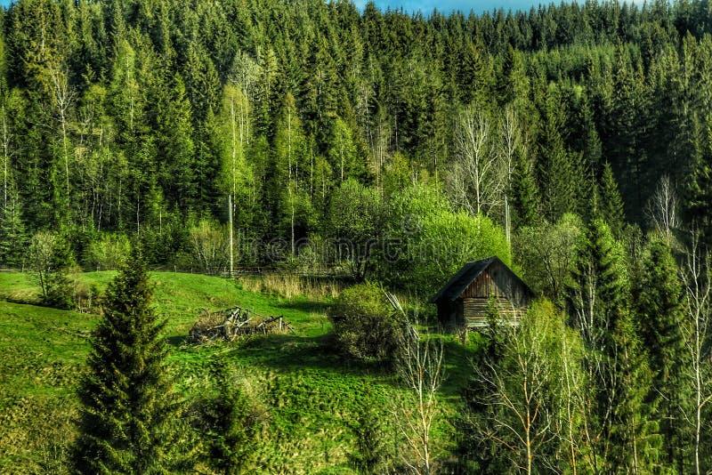 一个早晨在森林 免版税图库摄影