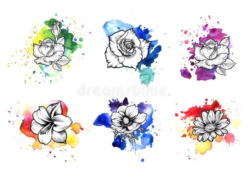 一个明亮的五颜六色的无形的水彩污点 罗斯、鸦片和雏菊着墨花线图表 向量例证