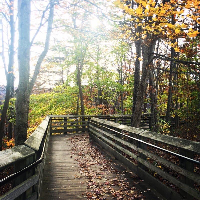 一个晴朗的秋天 免版税库存照片
