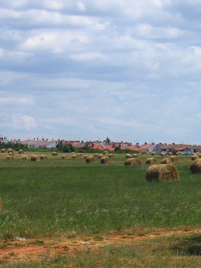 一个晴朗的草甸的干草堆 库存图片