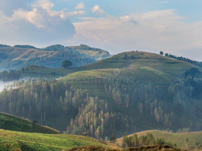 一个有雾的早晨的美好的山风景与树的在小山 图库摄影