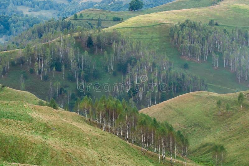 一个有雾的早晨的美好的山风景与树的在小山 库存图片