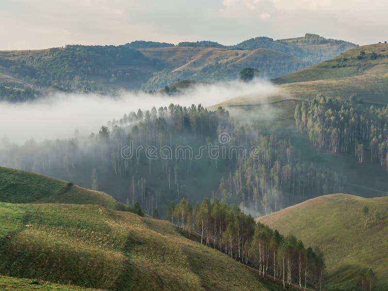 一个有雾的早晨的美好的山风景与树的在小山 免版税库存照片