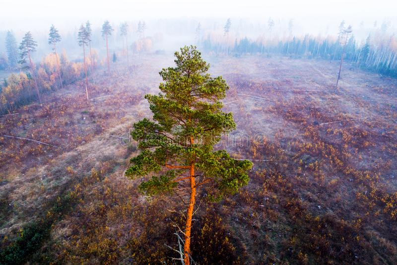 一个杉木身分在清楚区域 库存照片
