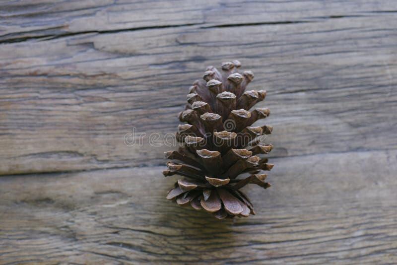 一个杉木锥体高看法  图库摄影
