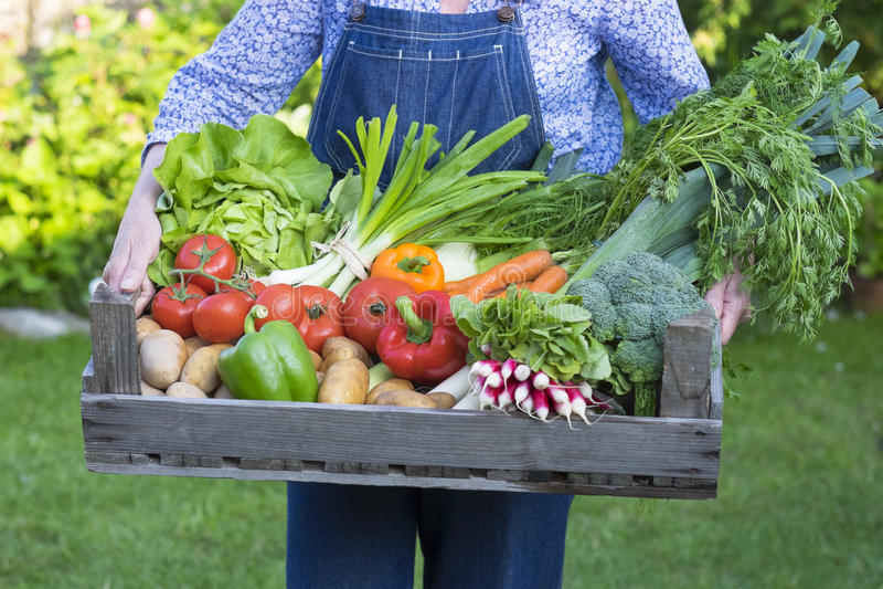 一个条板箱在妇女的胳膊的新鲜蔬菜 库存图片