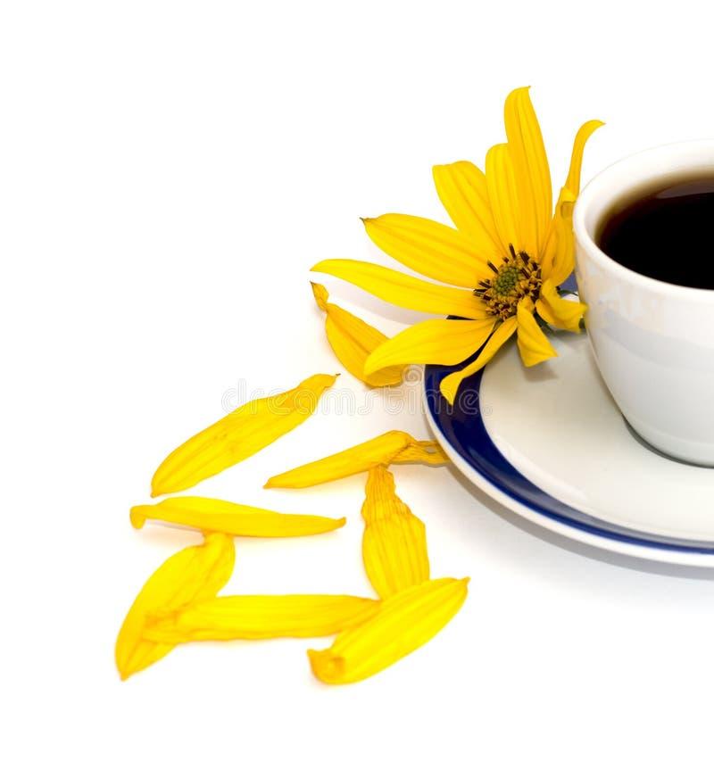 一个杯子的黄色花、瓣和片段关于咖啡, isolat的 库存照片