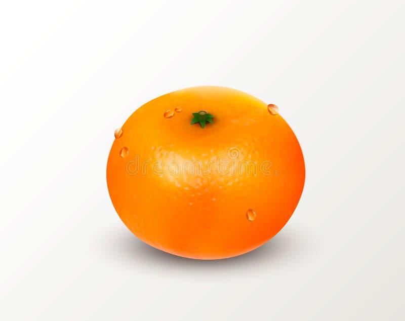 一个柑桔普通话或蜜桔在白色背景 可实现的向量例证 库存例证