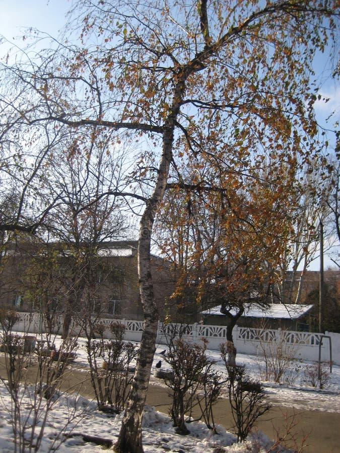 一个桦树的光秃的分支反对天空蔚蓝的 库存图片