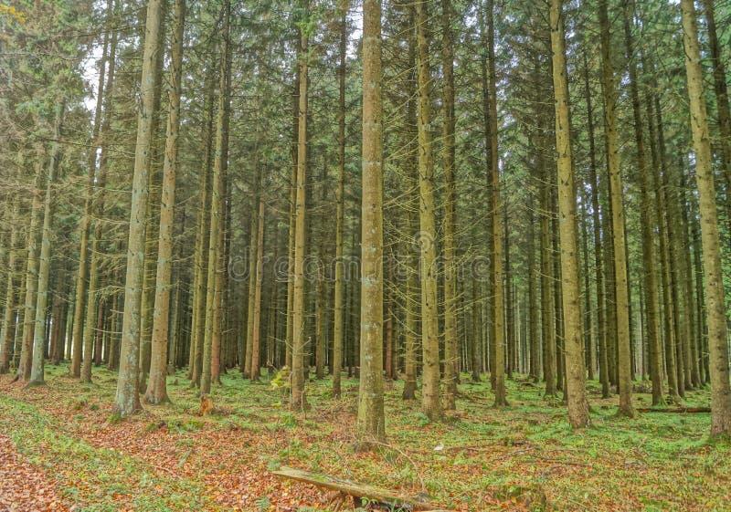 一个森林在秋天 免版税库存照片