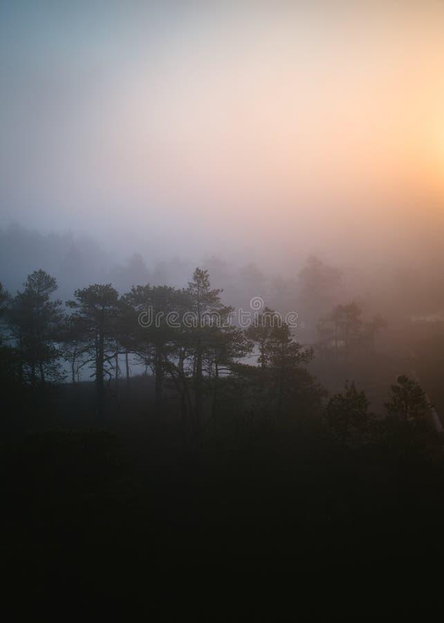 一个森林的美丽的射击在日落期间的 库存照片