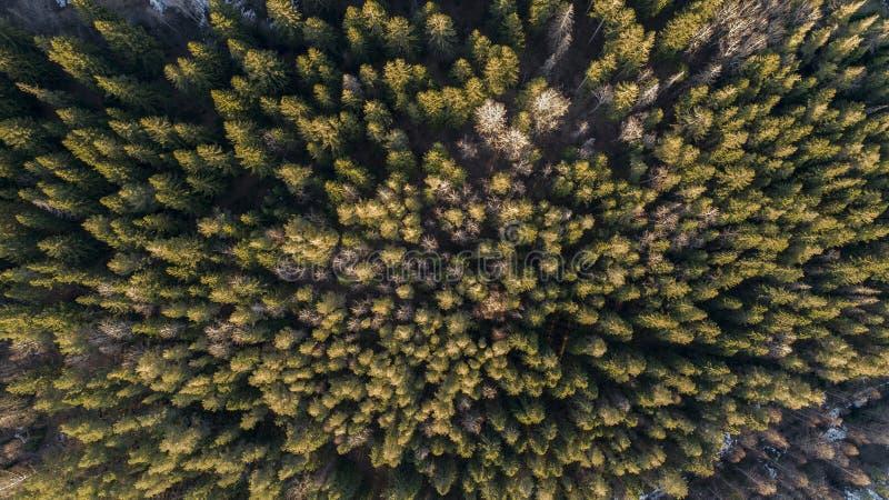 一个森林的航拍在冬天 免版税图库摄影