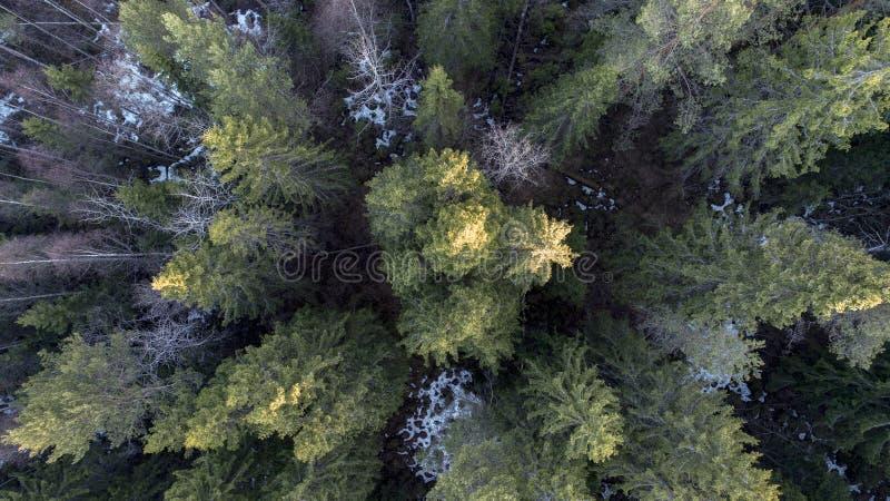 一个森林的航拍在冬天 图库摄影