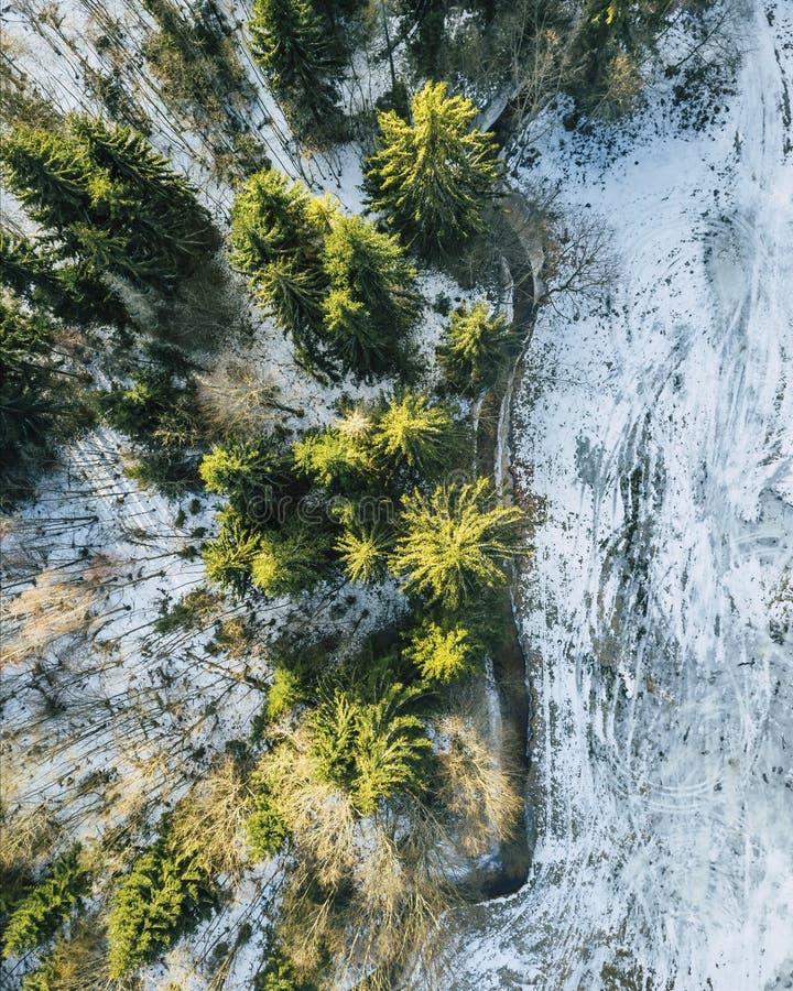 一个森林的航拍在冬天 森林的下来上面视图 免版税库存照片