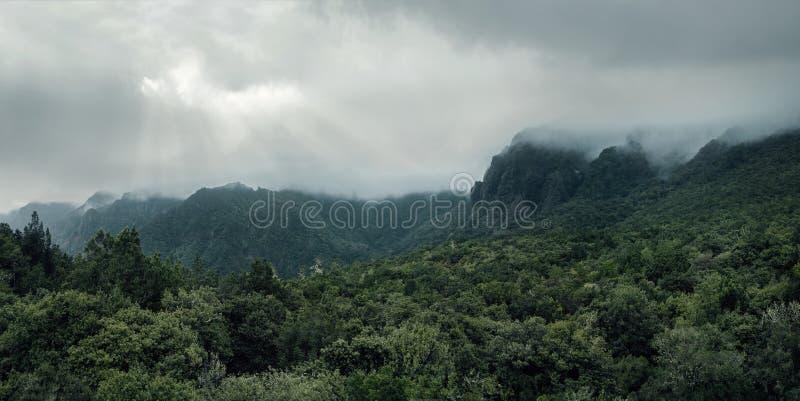 一个森林的鸟瞰图山的 免版税库存照片