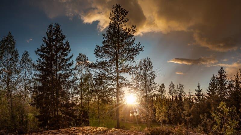 一个森林风景的全景在日落的 免版税库存图片
