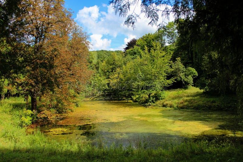 一个水池在一个被放弃的公园 免版税图库摄影