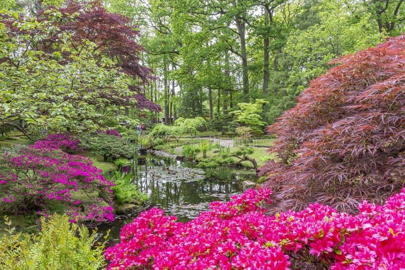一个池塘在日本庭院在公园Clingendael,海牙由杜娟花包围和树和灌木在许多不同颜色 库存图片