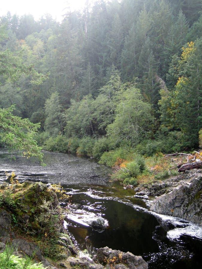 一个河和森林在Sooke,加拿大 免版税图库摄影
