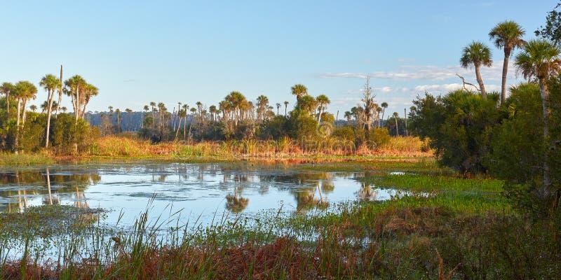 一个沼泽地环境的风景看法在奥兰多,佛罗里达附近的 图库摄影