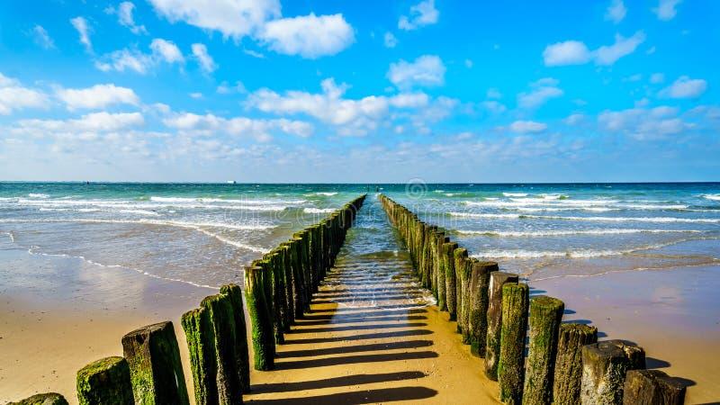 一个海滩侵蚀安全系统的木岗位沿海滩的在弗利辛恩镇西兰省省的 免版税图库摄影