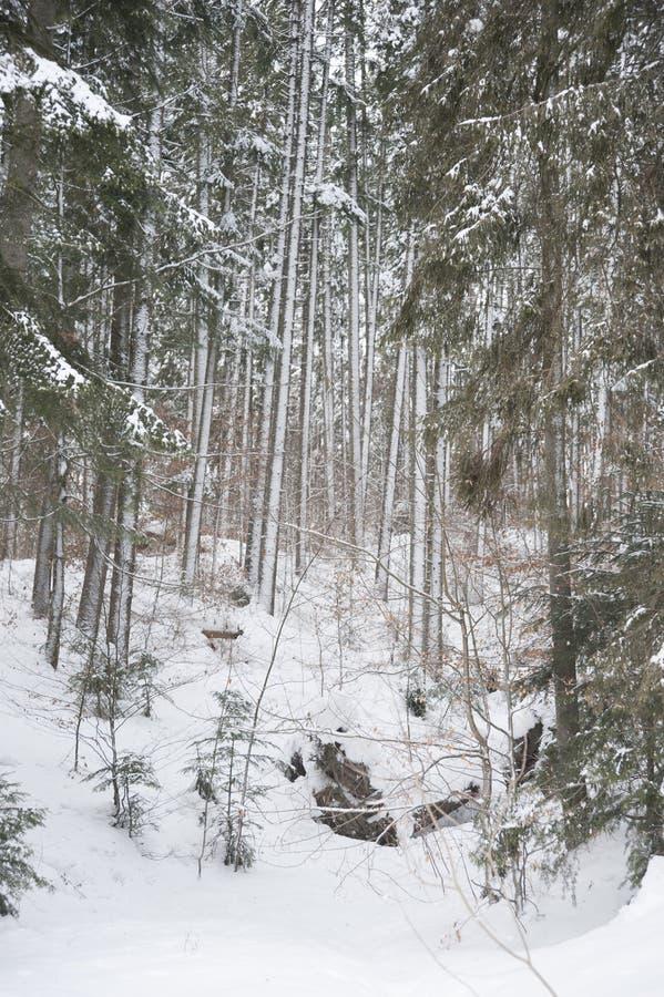 一个深森林的中部 库存图片