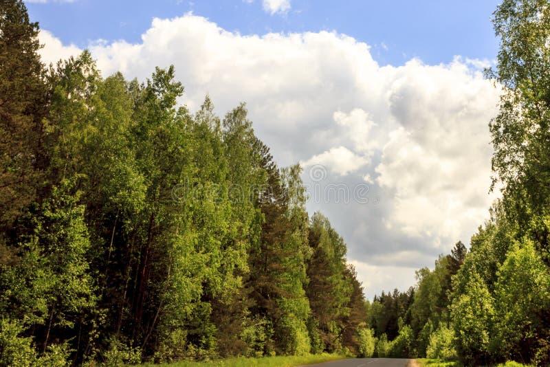 一个清楚,晴天 夏天 森林所有绿色和蓝天 免版税库存照片