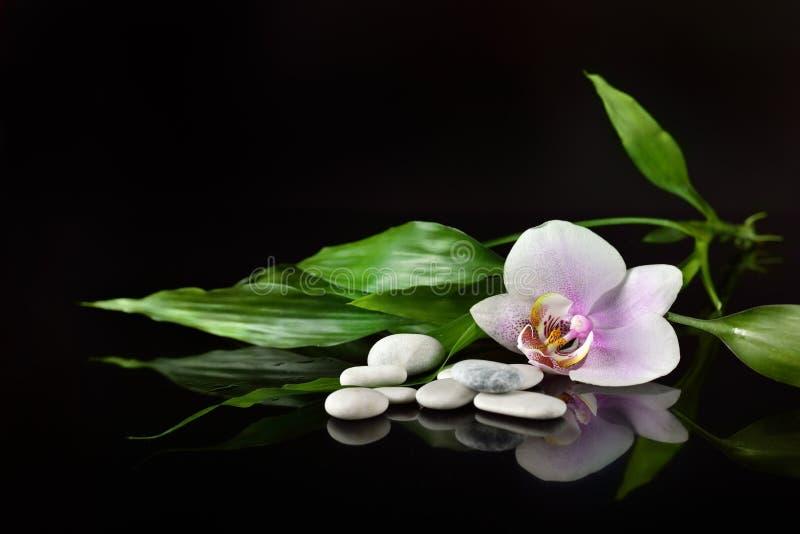 一个温泉的背景与石头、兰花花和竹子小树枝的  库存图片