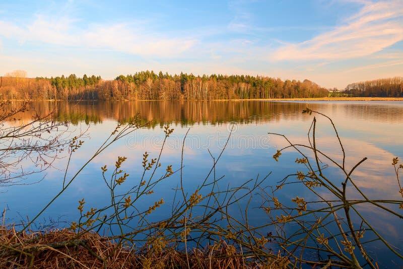 一个湖在森林里 免版税库存照片