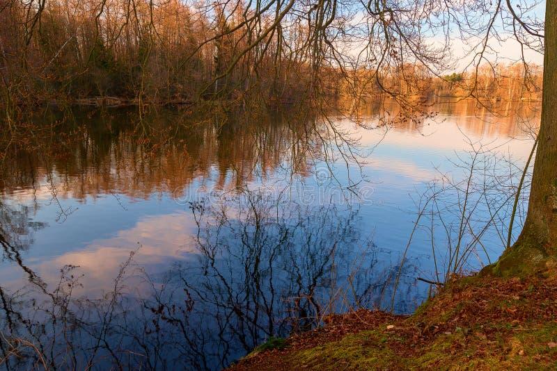 一个湖在森林里 库存照片
