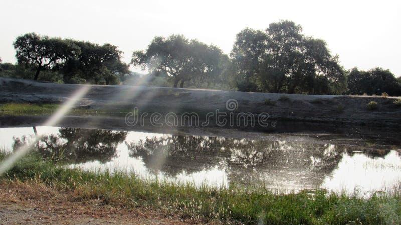 一个湖在草甸 库存照片