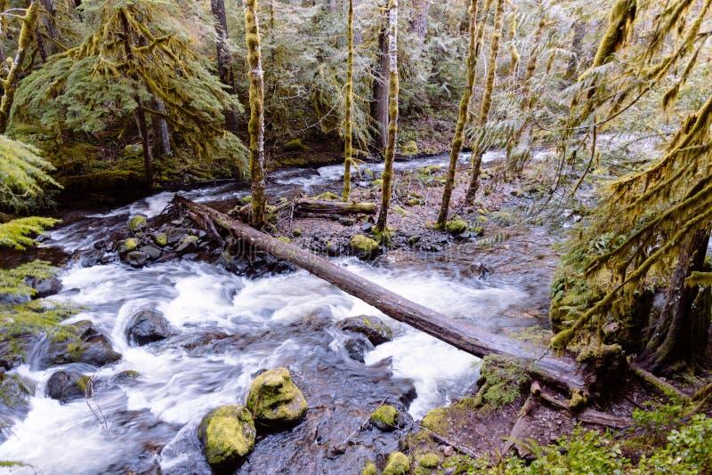 一个湖的美丽的射击在一个森林里在一个岩石地形 免版税库存图片